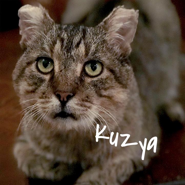 kuzya_2